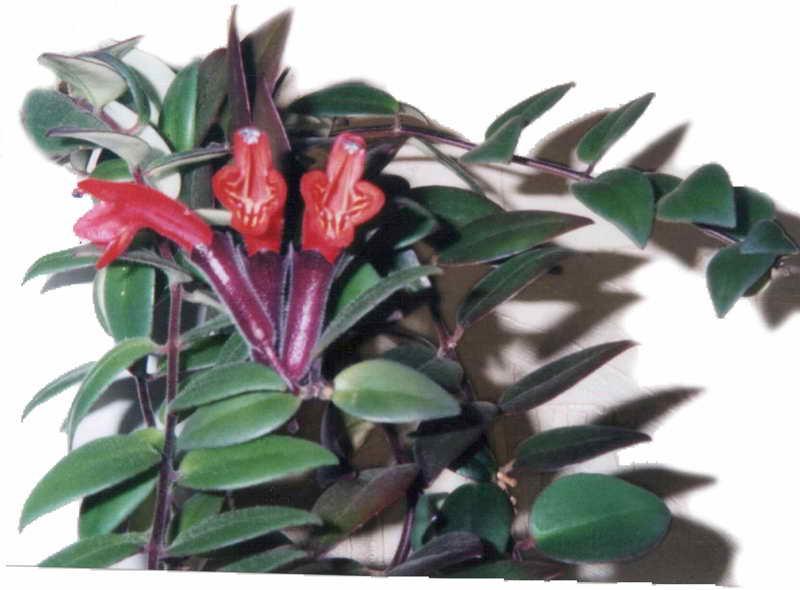 Можно ли сажать лесной папоротник у дома